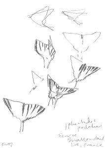Kurt Jackson - Scarce Swallowtail.