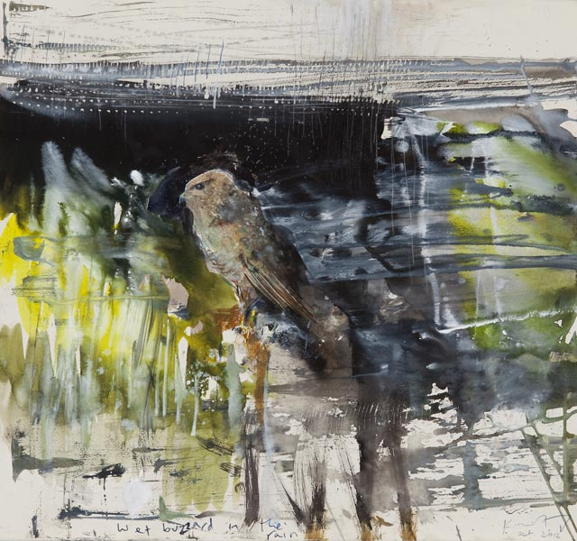 Wet buzzard in the rain. October 2012. mixed media on paper. 56 x 60cm.